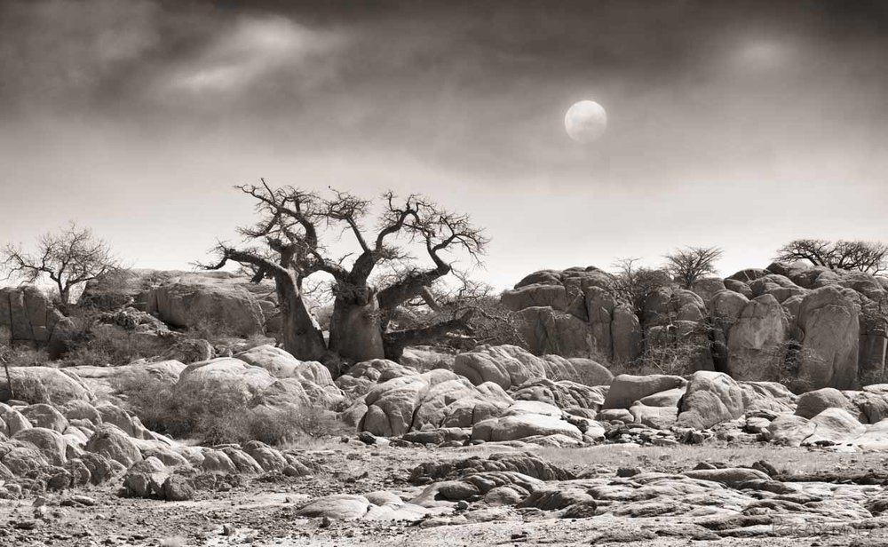 The Baobab & the Moon | Landscape Art Pictures