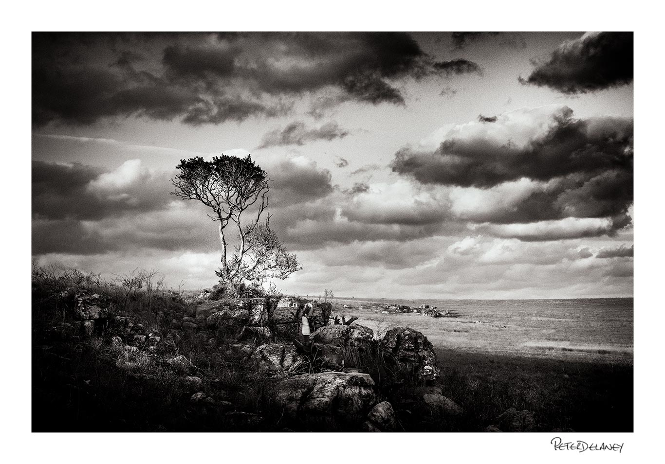 Standing strong tree wild coast wall art