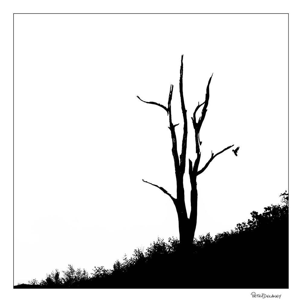 Tree and Raptor,