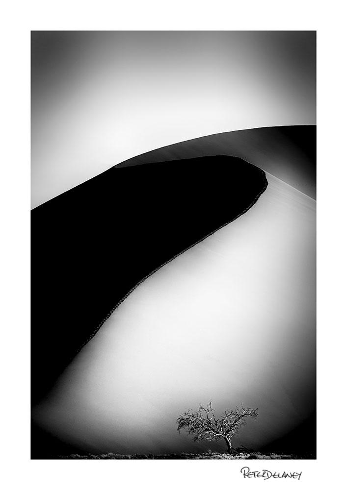 Dune-45-Tree-BW-2018-.jpg