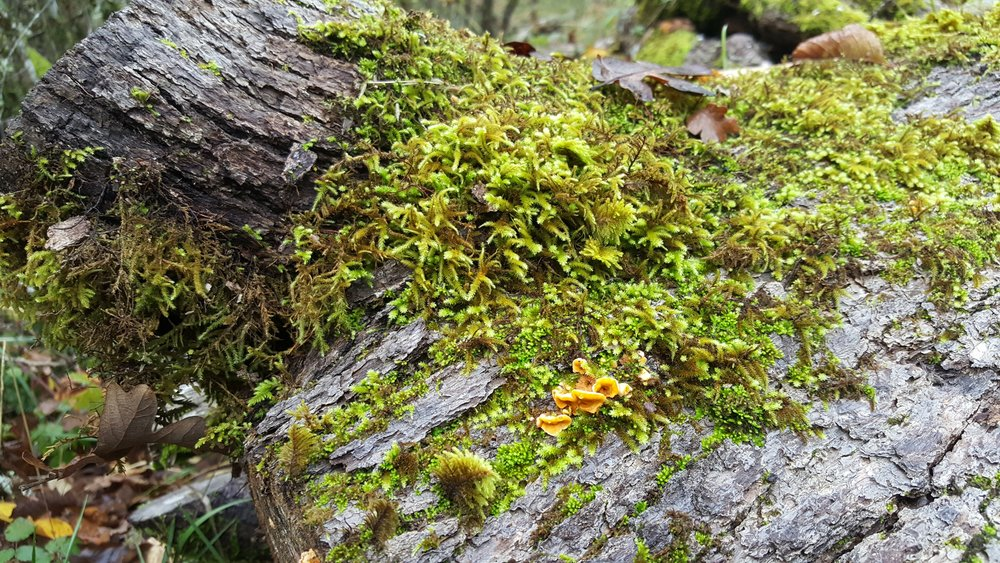 Moss on wood bark