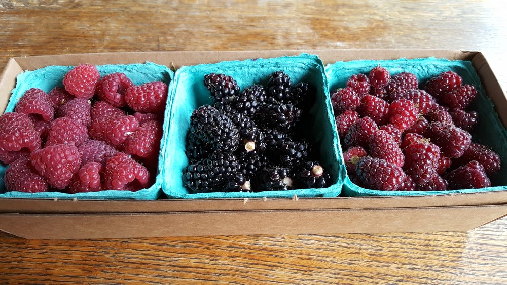 Fresh berries from Dennison Farms