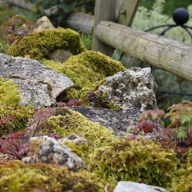 Take a closer look at the natural textures all around us. Gorgeous old Cotswold stone walls, covered in lush moss against a backdrop of wood and iron. Let's not forget the rose shoots cropping up all over the place either. Love it!  #natural #texture #lush #cotswold #countryside #bandb #stay #explore