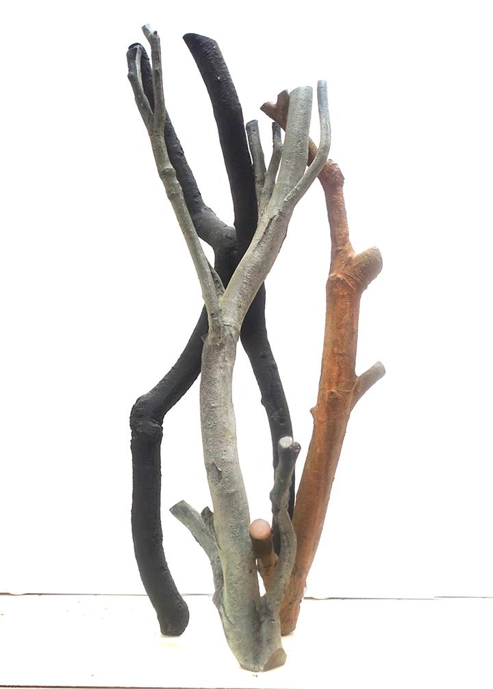 Birch Beech Pine