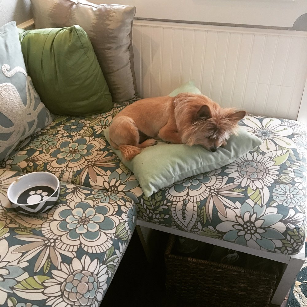 Squirrel often knocks over a pillow and naps on it, like a little nap throne.