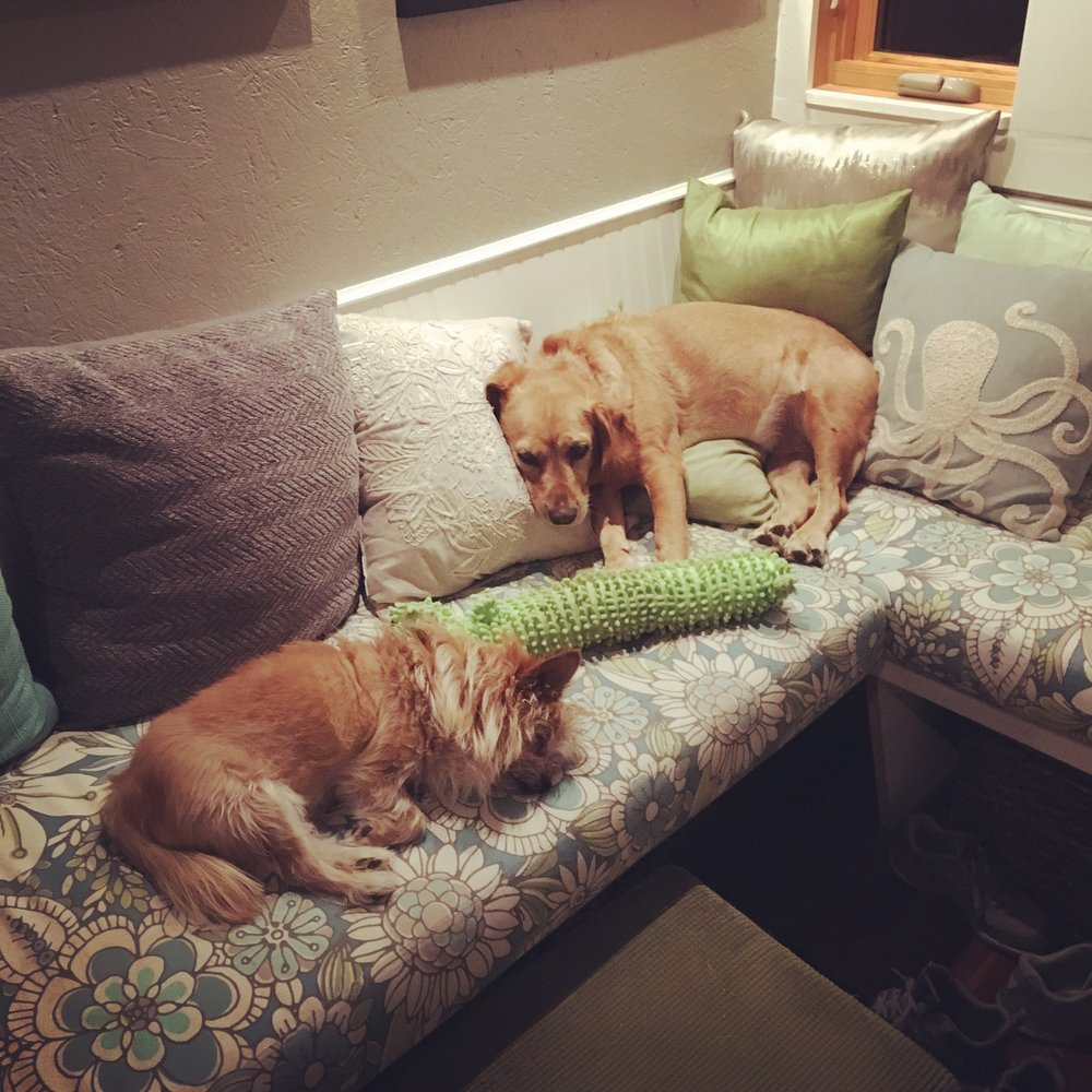 I guess they both like the pillows.