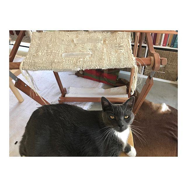 Gus, holding it down in the Studio. . . . . #weaving #studiocat #catsofinstagram #fiber