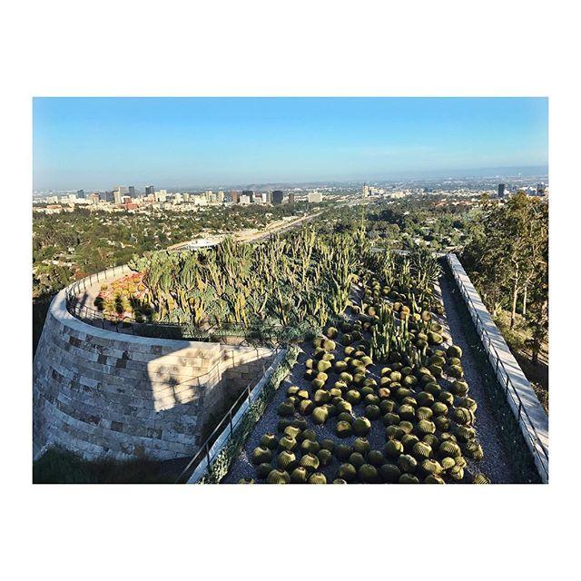 #la #thegetty #artmuseum #cactus