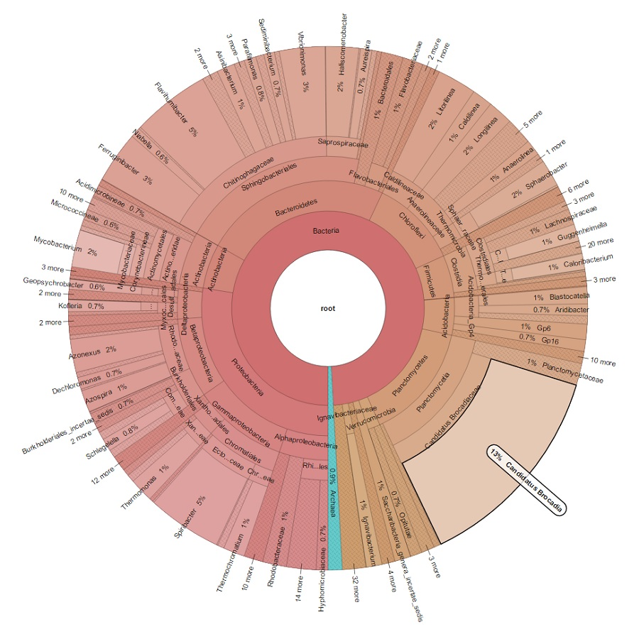 Figure. Microbial community structure of the AMX BBF at JWPCP. This is based on the amplicon sequencing targeting 16S rRNA genes.
