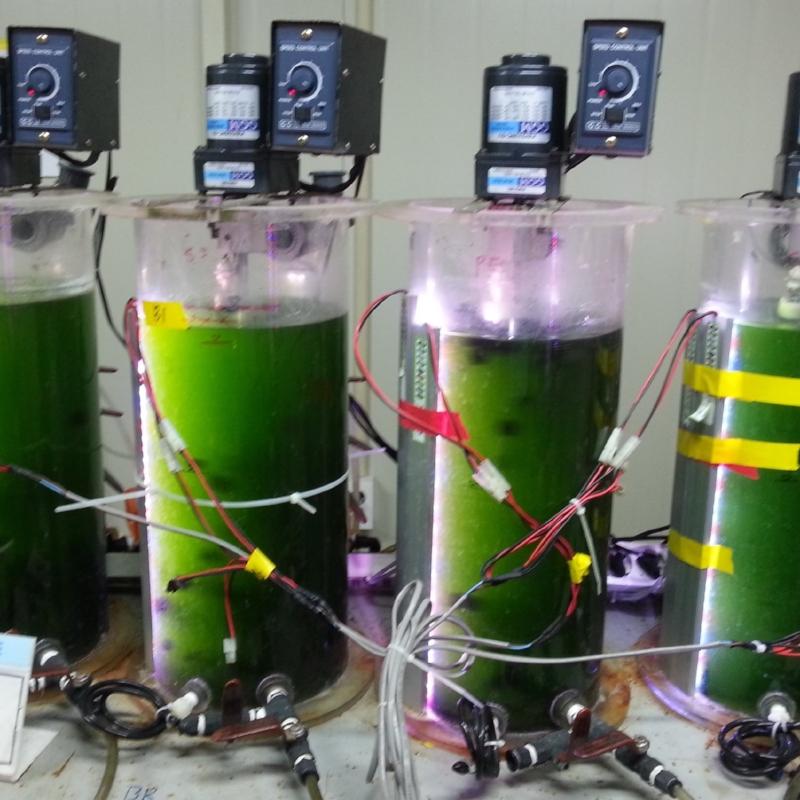 Algae -
