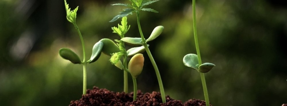 Green Biotechnology -