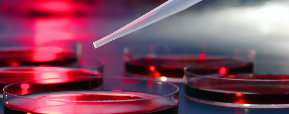 Red Biotechnology -