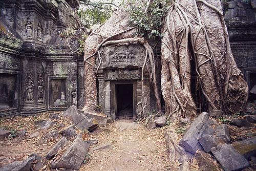 temple-ta-prohm-500.jpg