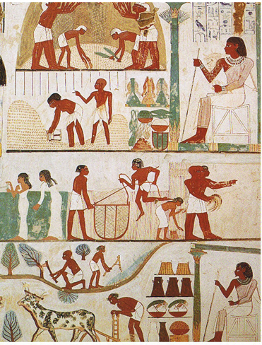 Agricultural scenes of threshing, a grain store, harvesting with sickles, digging, tree-cutting and ploughing from the tomb of Nakht, 18th Dynasty. Norman de Garis Davies, Nina Davies  Thebes. CC-PD-Mark, via Wikimedia Commons