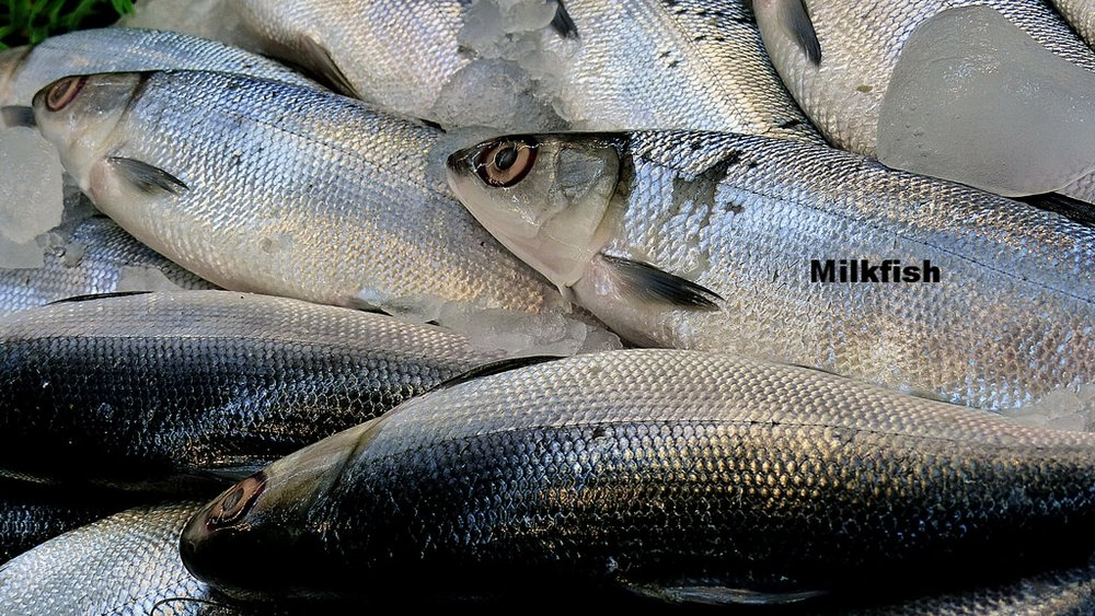 Milk Fish. Local market. Laoag. By Bernard Spragg. NZ. [CC0 1.0]. Via Flickr