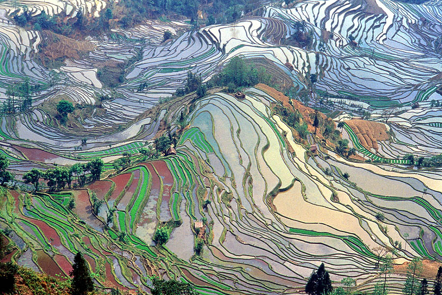 Terrace rice fields in Yunnan Province, China. By Jialiang Gao, www.peace-on-eath.org. [GFDL or CC BY-SA 2.5 or CC BY-SA 3.0]. Via Wikimedia Commons.