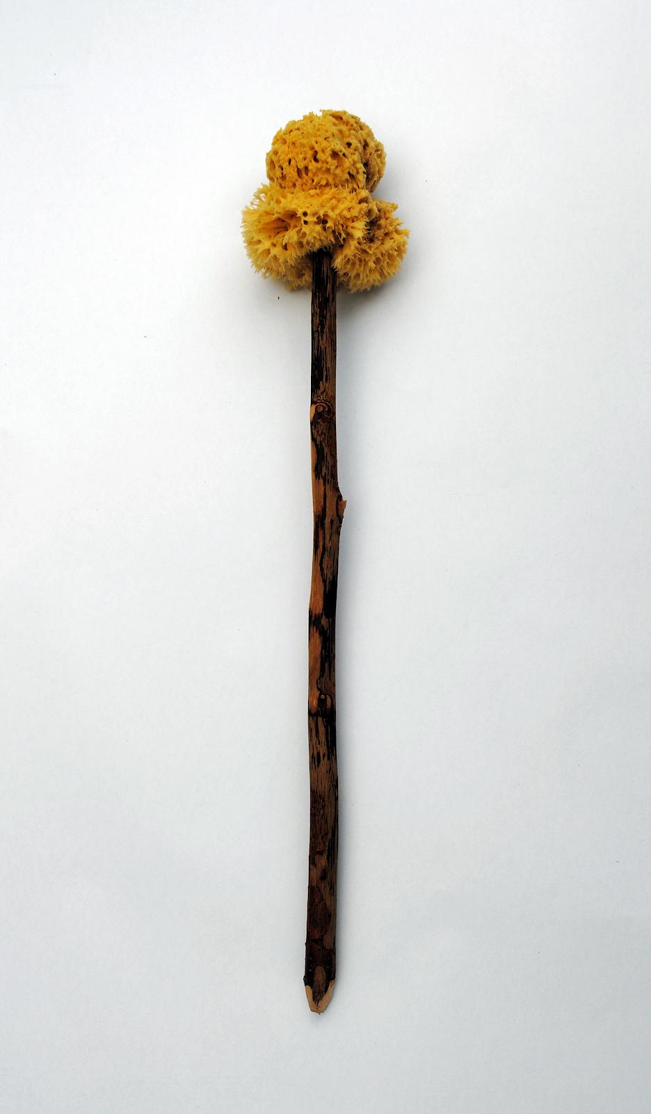 D. Herdemerten.  Xylospongium .  November 2012. Sponge on a stick.