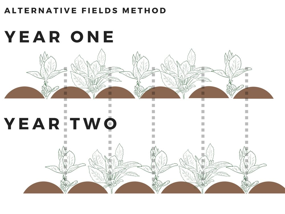 Author's own work, Jasmine Yeo, Alternative fields method showing the alternating ridges and furrows,  Canva , (27 April 2018)