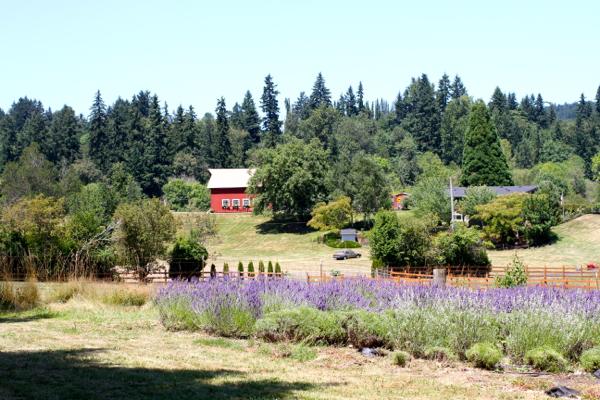 Oregon Lavender Farms — Talk Of Tomatoes