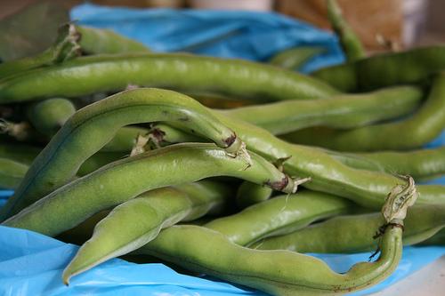 fava beans www.talkoftomatoes.com