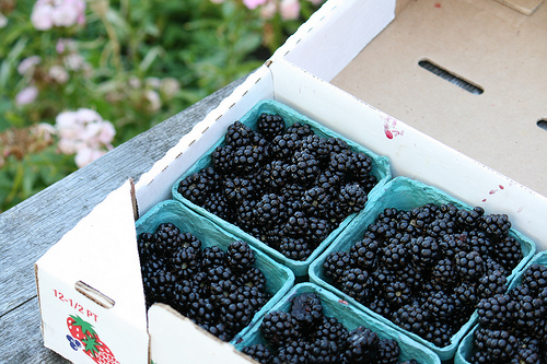 flat of blackberries