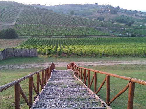 pathway www.talkoftomatoes.com
