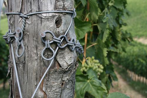 wine stake
