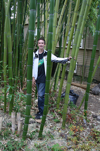 tree bamboo