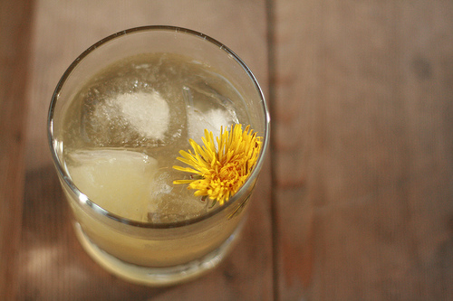 dandelion cocktail