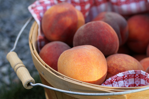 farm peaches