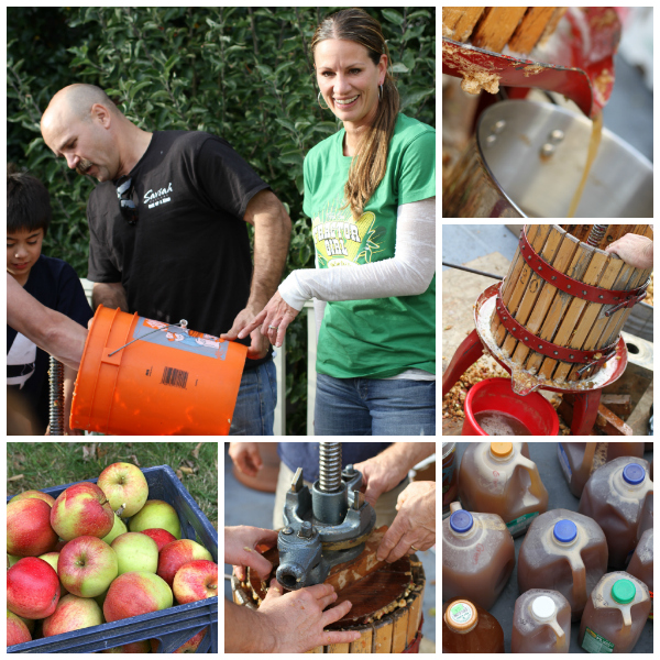 apple cider pressing @talkoftomatoes