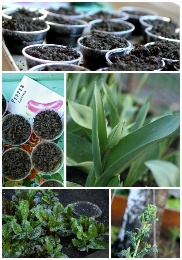 garden starts @talkoftomatoes