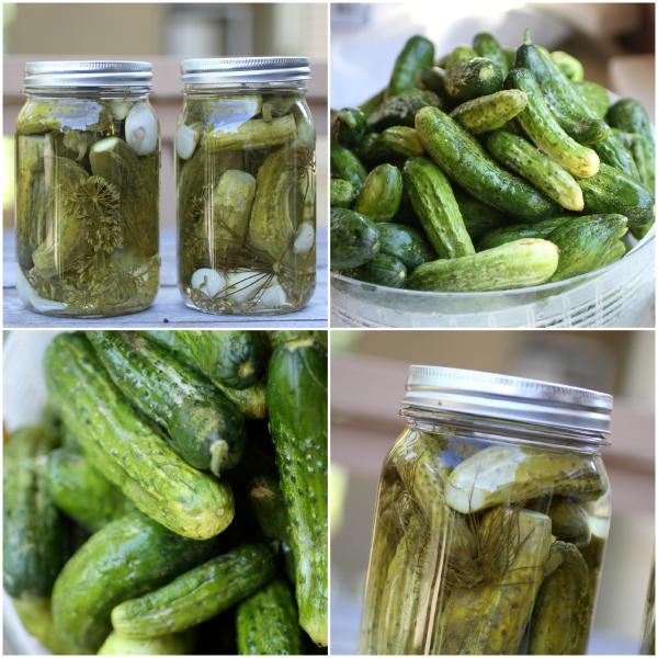cucumber pickles @talkoftomatoes