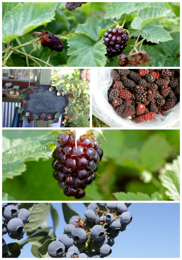 marionberries @talkoftomatoes