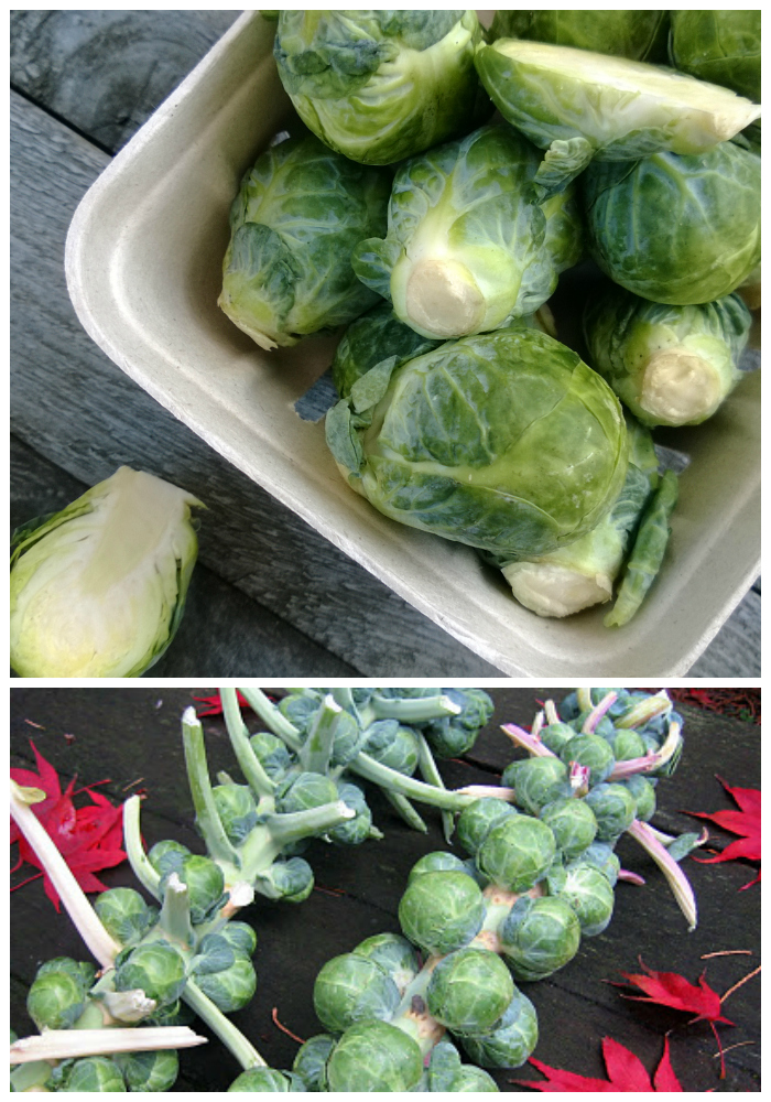 attractive storing brussel sprouts Part - 3: attractive storing brussel sprouts good looking