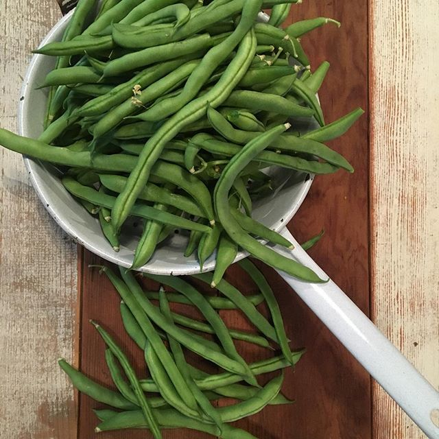 #urbanfarm #frommygarden going to make dilly beans from @foodinjars cookbook #musthave #foodpreservation #foodpreserving #canning