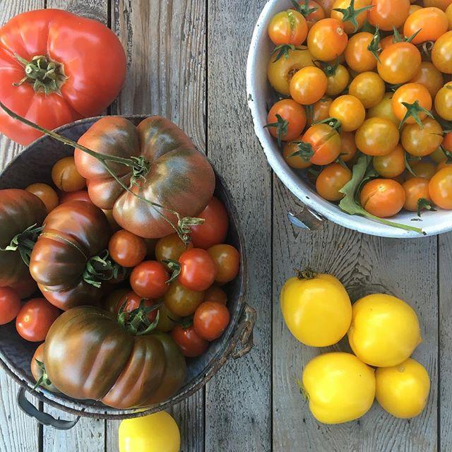 My #namesake #heirloomtomatoes #urbanorganicgardener #tomato #