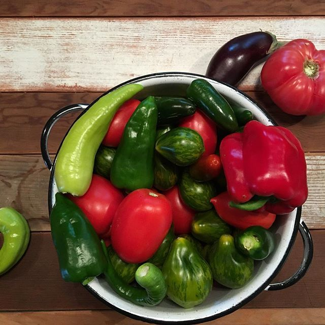 Morning visit to the garden! #Swoon #diyfood #peppers #tomatoes #homesteading #urbanfarming #nightshades #vegetables