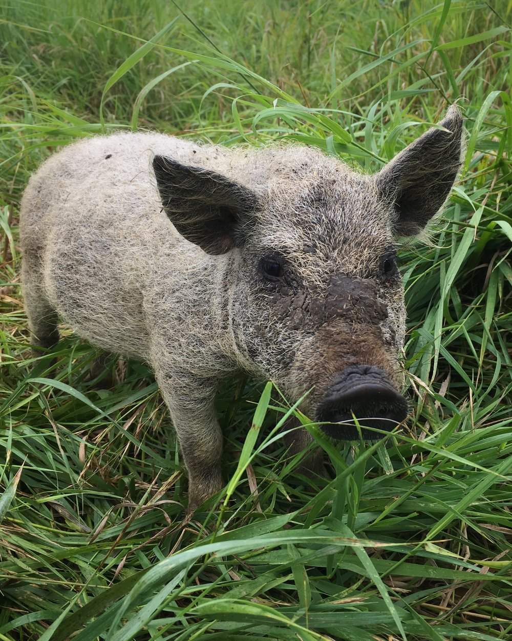 Loving life in a fresh pasture, and her tummy is feeling better now that the nasty roundworms are gone!