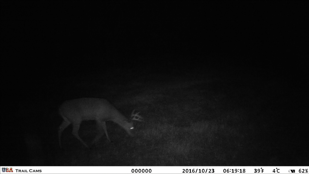 6 or 8 pointer