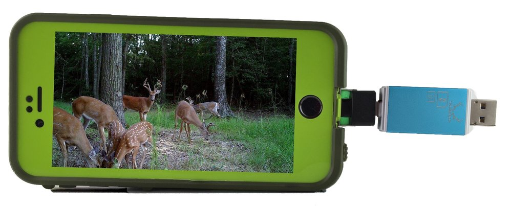 Blue Trail Cam Buddy being used with iPhone 6 and Lifeproof Fre case