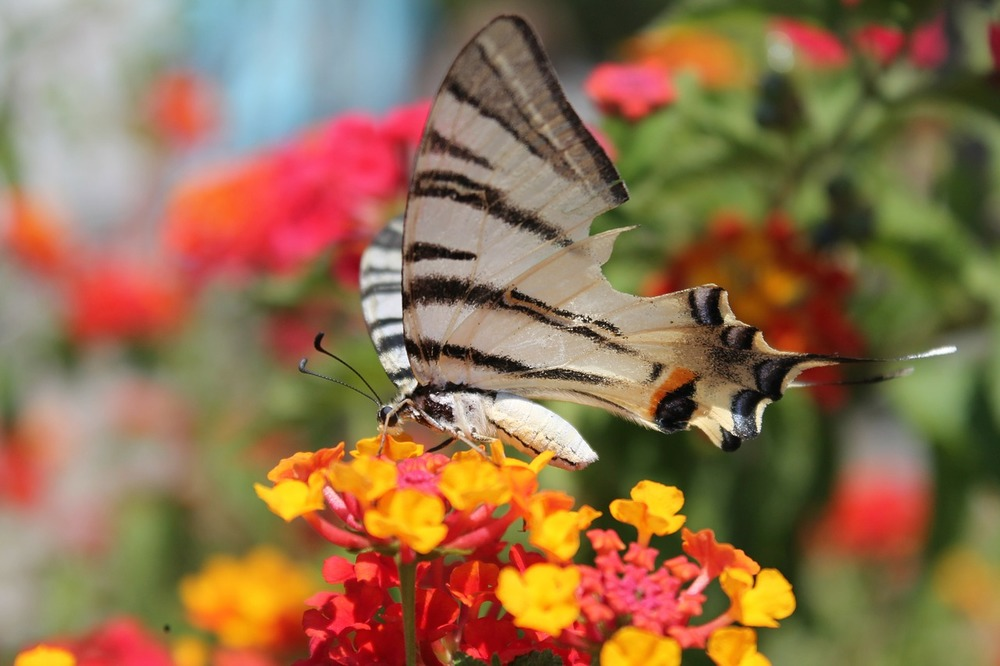 butterfly-106599_1280