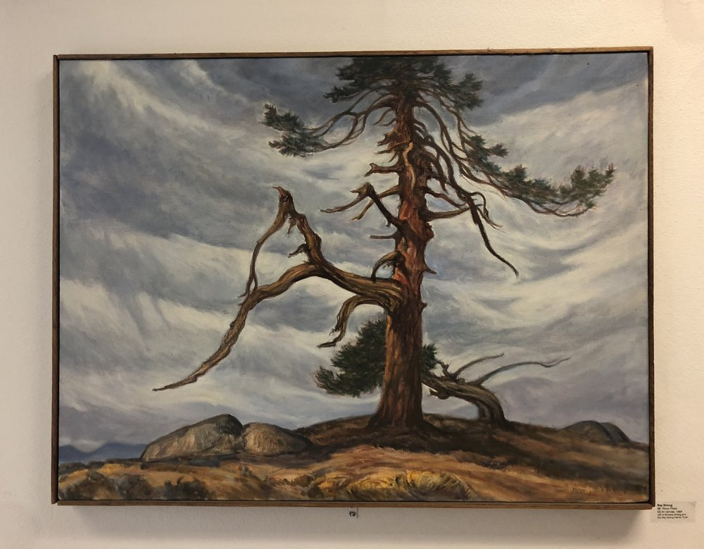 Ray STRONG     Mt. Pinos Pine   1984