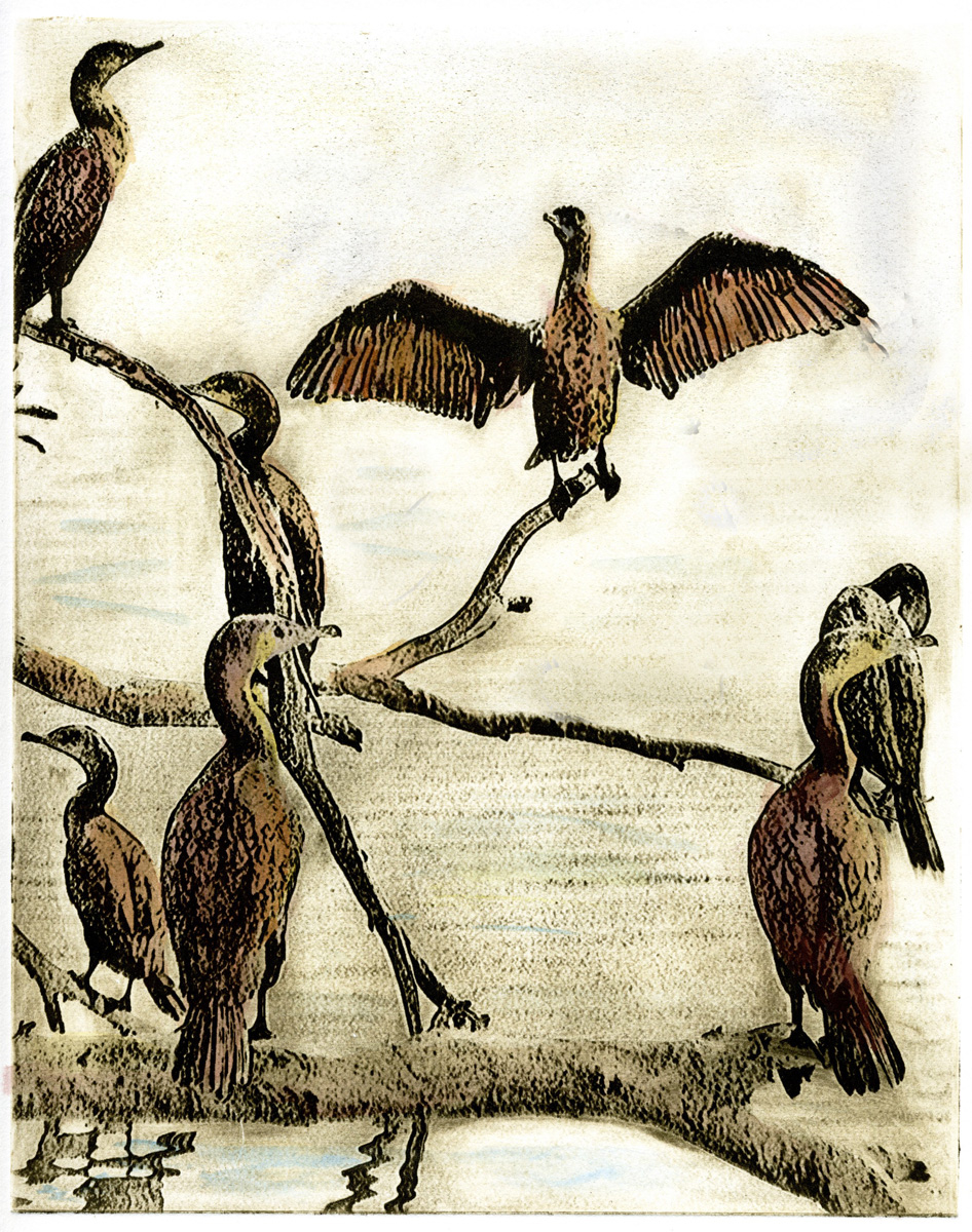 39 Don Zimmerman_Lagoon Birds VII.jpg