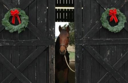 My background will be a similar look as these barn doors and the same color. Rather than wreaths there will be fresh garland and a live Christmas tree. Sorry, I won't have a horse ;) - As I get my backdrop setup I will add more photos