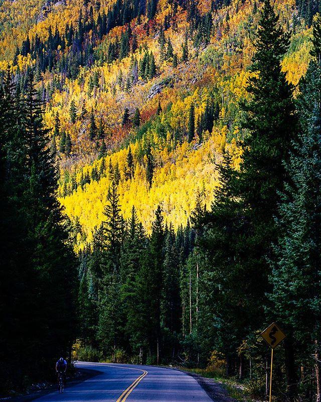 Hills of gold. #denverphotographer #dnvrcolorado #coloradotography #coloradocreative #coloradooutdoors #coloradoshared #coloradolife #mountainlife #fallcolor #getoutside #vitaminn #americanadventurist