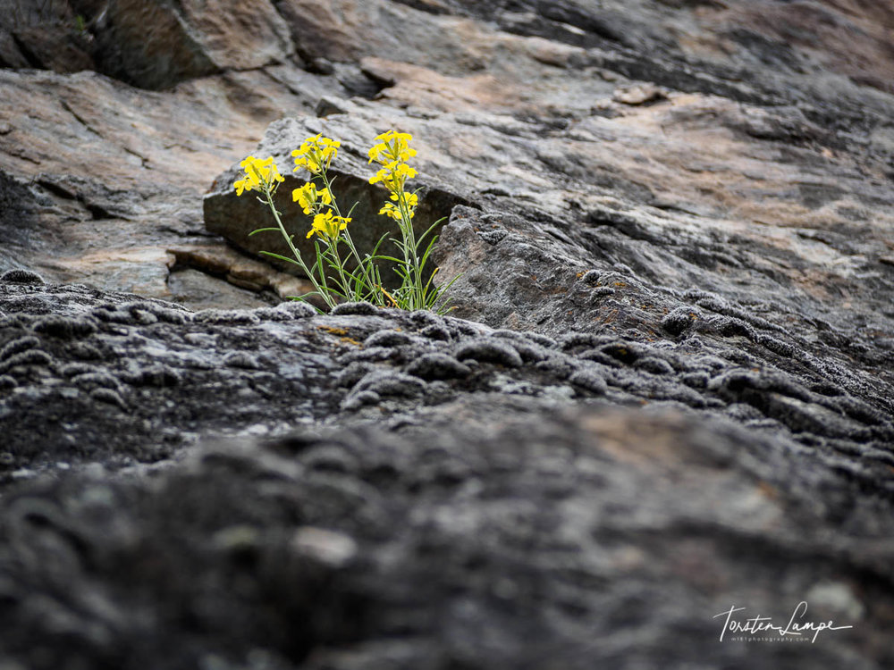 20180510_WS-Südtirol-Klettern-P5100798-Web.jpg