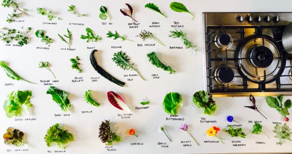 """An assortment of the greens available to us on the farm. Everything is organic and so amazingly """"clean"""" that the seldom even have to wash the produce."""