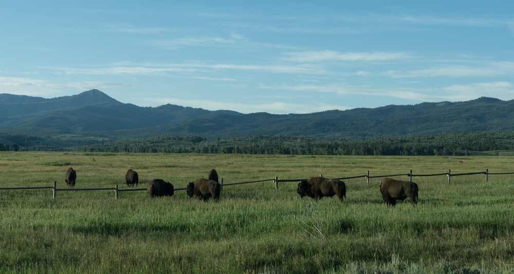 0047_Yellowstone_National_Park_2016-07-05.jpg