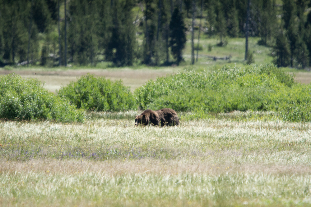 0152_Yellowstone_National_Park_2016-07-07.jpg